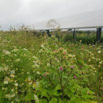 Biodiversiteit zonnevelden LC Energy