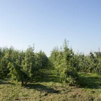 Fruitteelt waar LC Energy Zonneveld Wijkerbroek ontwikkelt